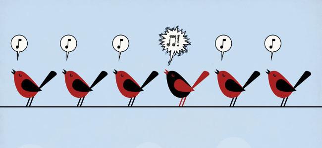oiseaux_petite (1)